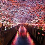 Pop Culture Japonaise : les Tendances du Pays du Soleil Levant